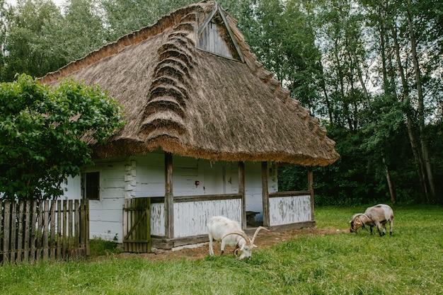 Uma velha casa de madeira com um canudo. Foto Premium