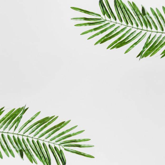 Uma visão elevada das folhas verdes isoladas no pano de fundo branco Foto gratuita