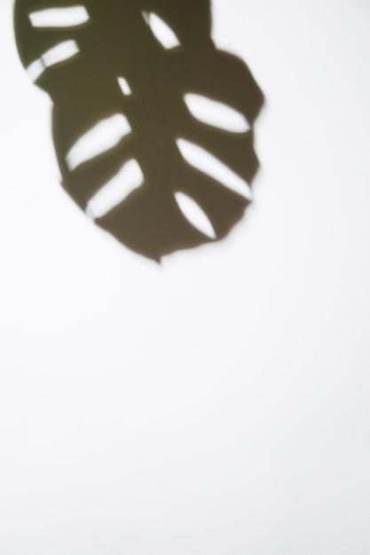 Uma visão elevada de monstera escuro deixa no pano de fundo branco Foto gratuita