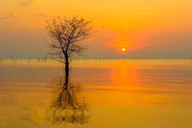 Única árvore de mangue no mar no céu do nascer do sol Foto Premium