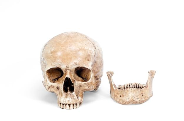 Único crânio humano isolado no fundo branco Foto Premium