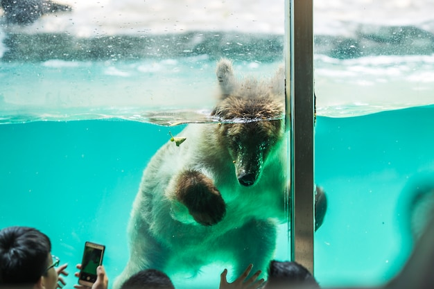 Urso submerso em água Foto gratuita