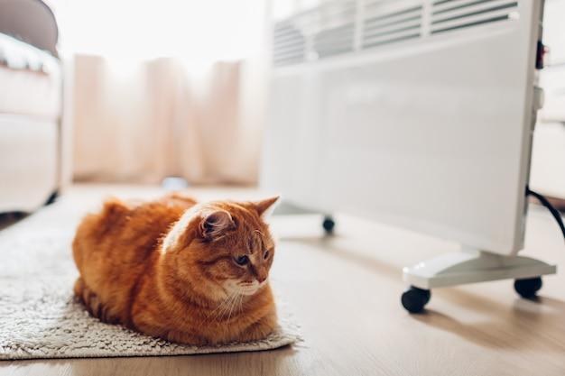 Usando aquecedor em casa. estação de aquecimento. aquecimento do gato deitado por dispositivo Foto Premium