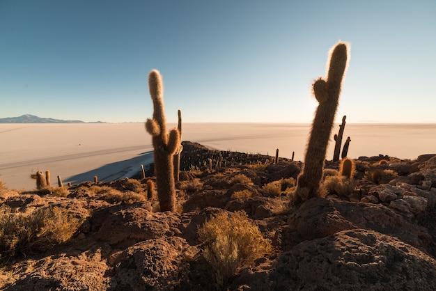 Uyuni salt flat no nascer do sol, destino de viagem na bolívia e na américa do sul. Foto Premium