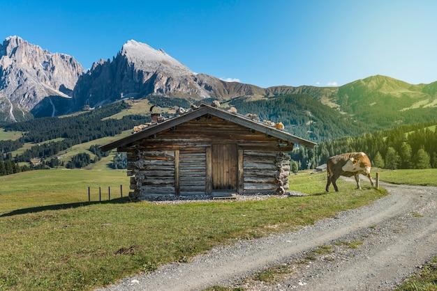 Vaca perto de uma casa de madeira no campo, casa de madeira com uma vaca Foto Premium