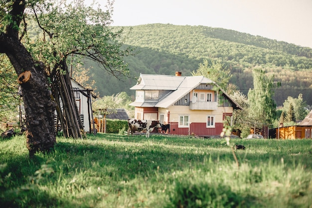Vale da montanha dos cárpatos perto da aldeia, com vista sobre as casas e gado Foto Premium
