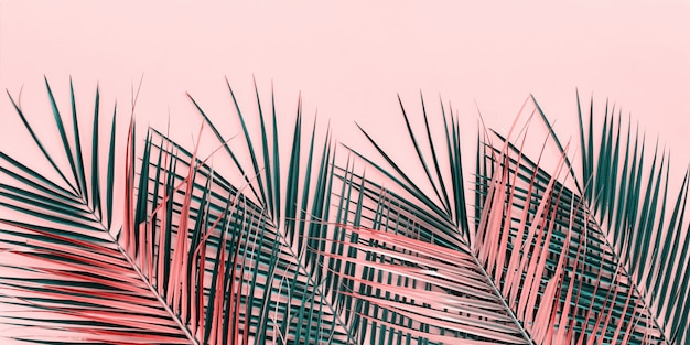 Variações tropical palm leaves flat lay top view Foto Premium