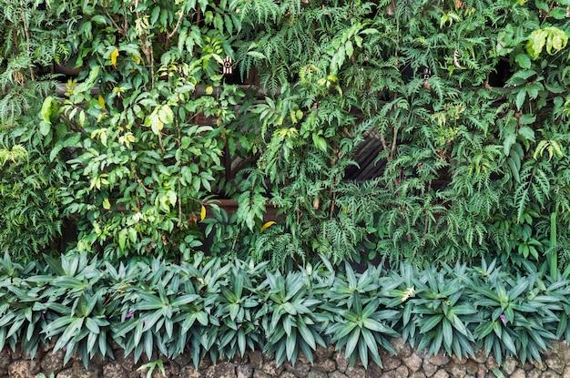 Várias plantas verdes na parede do jardim Foto Premium