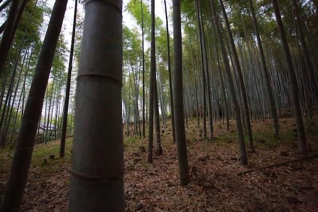Variedade de árvores crescendo juntas na floresta Foto gratuita