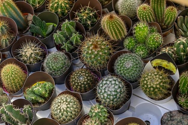 Variedade de plantas de cactos em close-up Foto gratuita