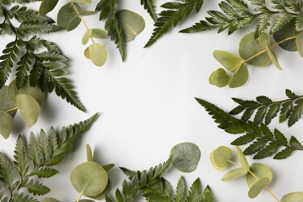 Variedade de vista superior de folhas verdes Foto gratuita