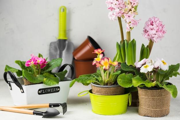 Vasos de flores desabrochando de ângulo alto com ferramentas Foto gratuita