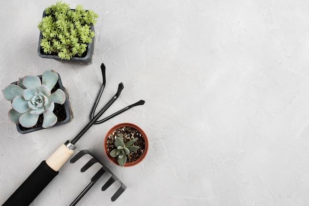 Vasos de plantas e ferramentas de jardinagem na mesa branca Foto gratuita