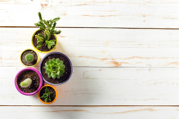Vasos de plantas em madeira branca Foto Premium