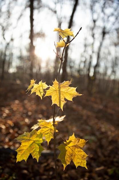 Vegetação de plantas naturais no parque Foto gratuita