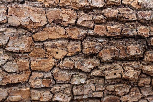 Velha textura de casca de árvore em relevo close-up. fundo natural Foto Premium