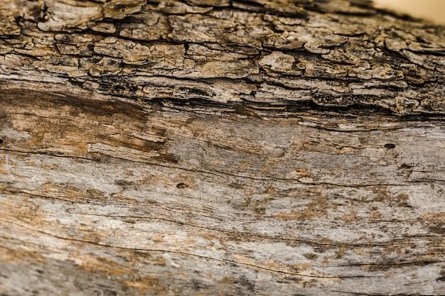 Velho tronco de árvore texturizado fundo Foto gratuita