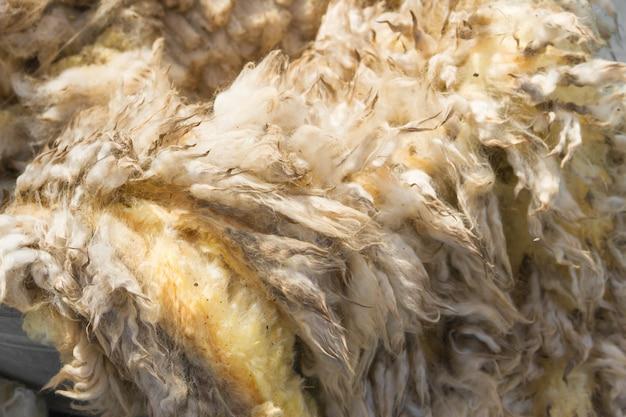 Velo de lã crua apenas cortado antes de ser fiado Foto Premium
