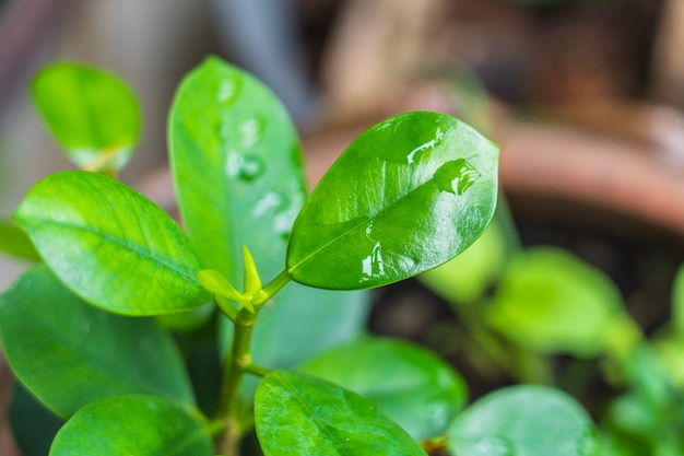 Verde brilhante estilo abstrato borrado de folha de plantas Foto Premium