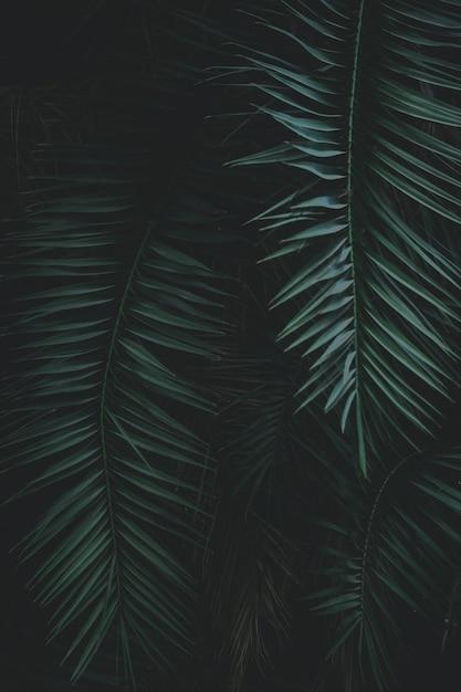 Verde, exoticas, folhas, cima Foto Premium