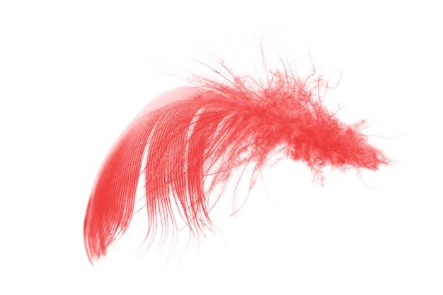 Vermelho isolado no fundo branco Foto Premium