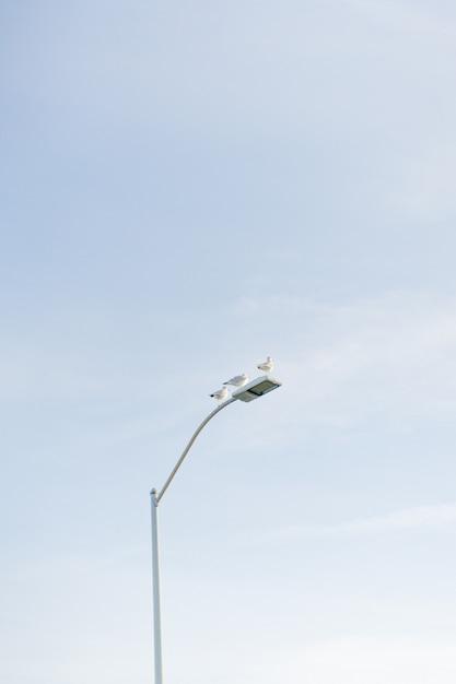 Vertical dos pombos, sentado em um poste de luz branco com o céu Foto gratuita
