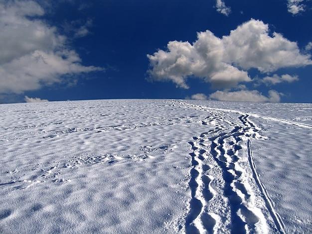 Vestígios de neve montanha caminhos florestais Foto gratuita