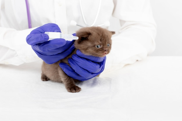 Veterinário apresenta colírio para um lindo gatinho com conjuntivite Foto Premium