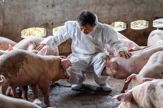 Veterinário asiático trabalhando e verificando o porco em fazendas de suínos, animais e suínos indústria de fazenda Foto Premium