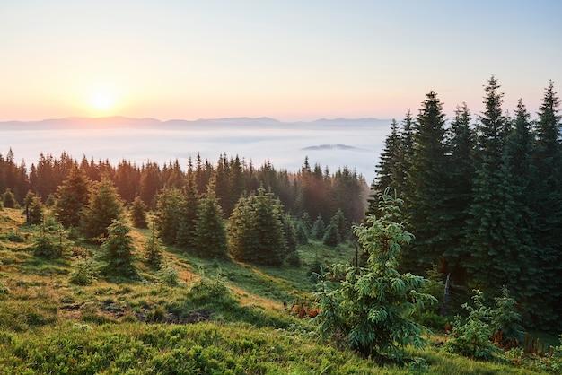 Viagens, caminhadas. paisagem de verão - montanhas, grama verde, árvores e céu azul. Foto gratuita