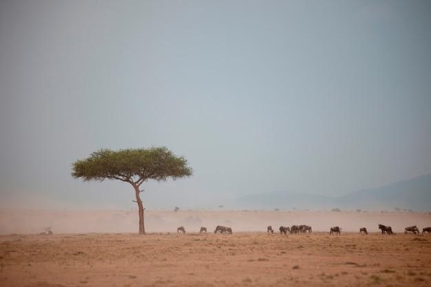 Vida selvagem no quênia Foto Premium