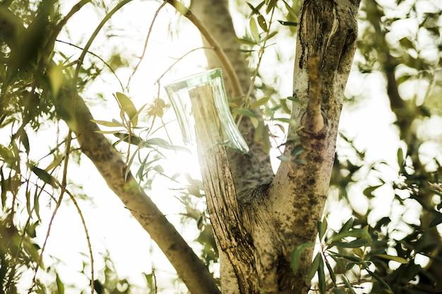Vidro quebrado pendurado no galho de árvore na luz solar Foto gratuita