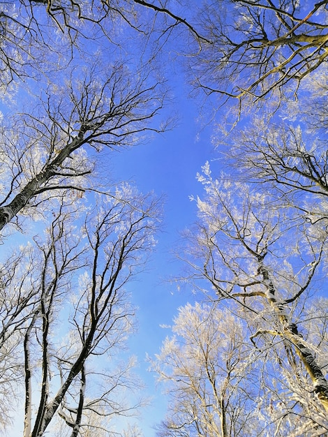 Visão de baixo ângulo de galhos de árvores cobertos de neve sob o céu azul em larvik, na noruega Foto gratuita