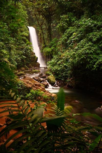 Visão geral das majestosas cachoeiras de la paz no meio de uma floresta exuberante na cinchona, costa rica Foto gratuita