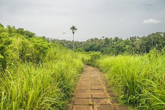 Visão geral de um caminho forrado de grama com uma bela vista de uma floresta de montanha em um dia nublado Foto gratuita