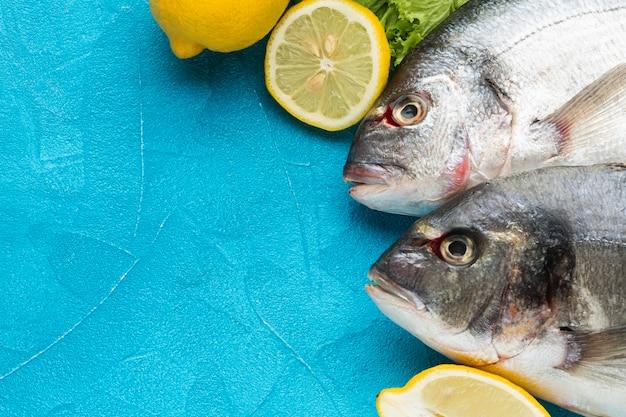 Vista acima dos peixes no fundo azul Foto gratuita