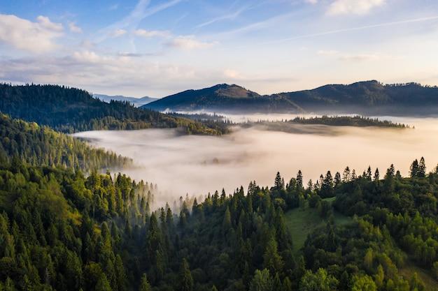 Vista aérea da floresta mista colorida, envolta em névoa da manhã em um lindo dia de outono Foto gratuita