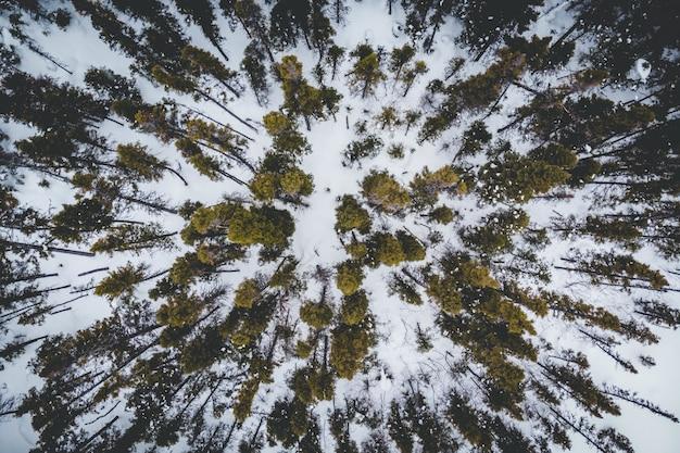 Vista aérea de árvores verdes no chão coberto de neve Foto gratuita