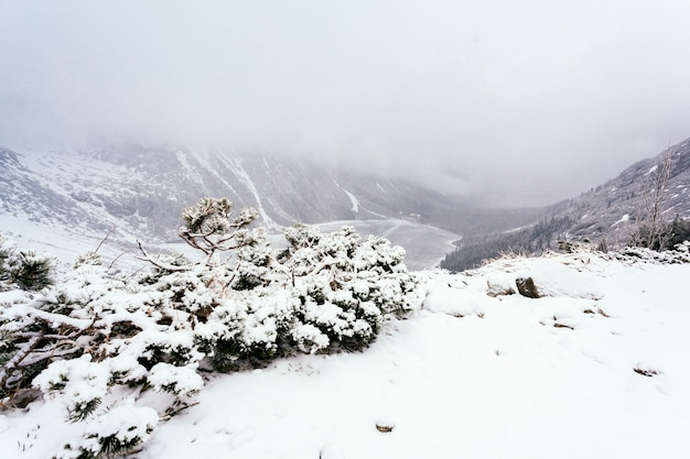 Vista aérea, de, neve coberta, árvores, em, inverno Foto gratuita