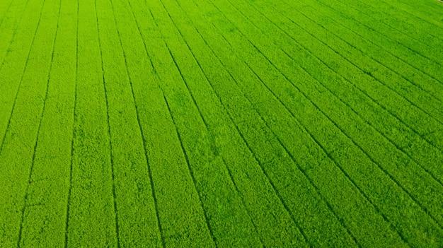 Vista aérea de voar drone de arroz de campo com paisagem verde natureza fundo, vista superior arroz de campo Foto Premium