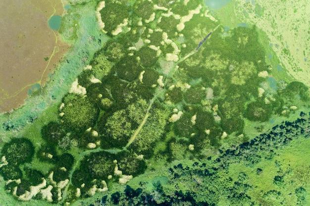 Vista aérea, drone, tiro, cima baixo, de, verde, floresta, e, lago Foto Premium