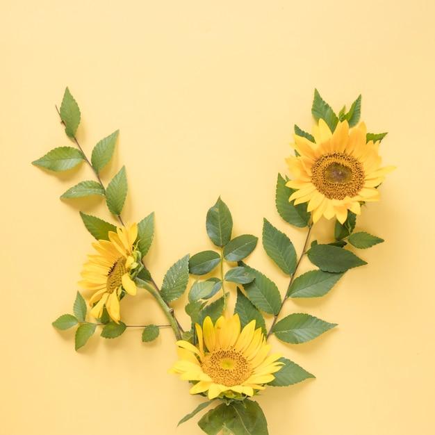 Vista alta ângulo, de, bonito, amarela, girassóis, ligado, experiência colorida Foto gratuita