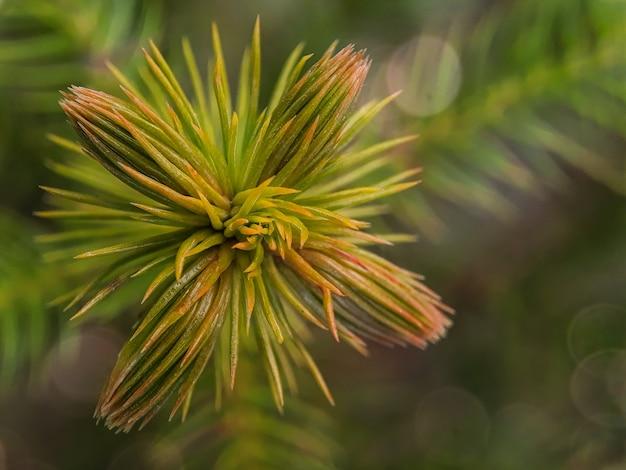 Vista aproximada da árvore de natal com fundo de efeito bokeh Foto Premium
