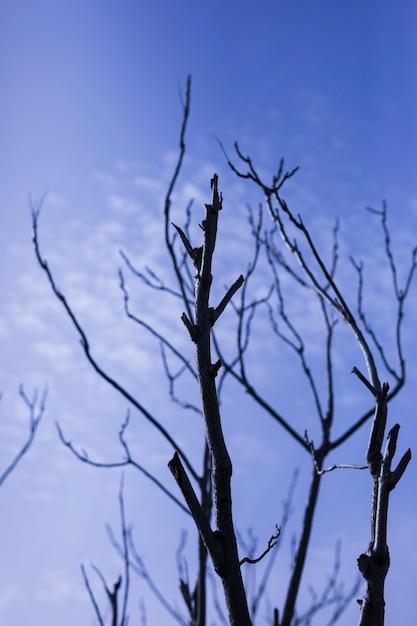 Vista baixa ângulo, de, árvore nua, contra, céu Foto gratuita