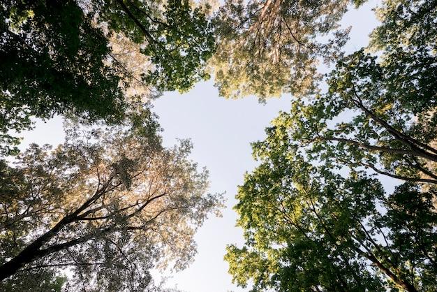 Vista baixa ângulo, de, filiais árvore, parque Foto gratuita