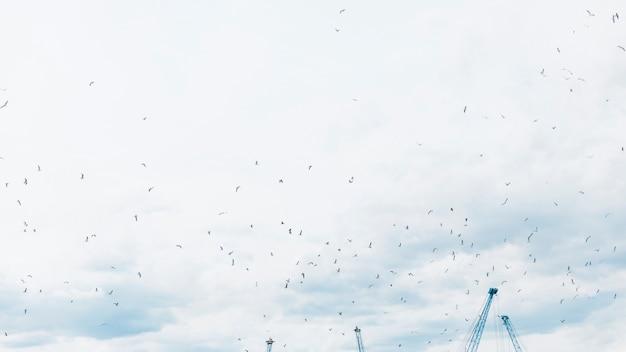 Vista baixa ângulo, de, gaivotas, voando, em, a, céu Foto gratuita