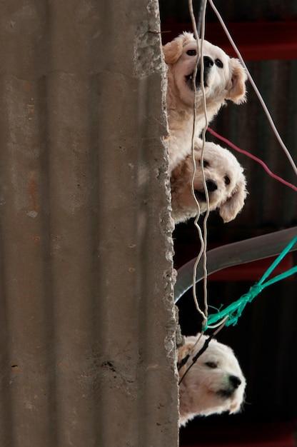 Vista baixa ângulo, de, três, filhotes cachorro, ligado, ondulado, amianto, telhando, colonia bethania, guatemala, guatemala Foto Premium