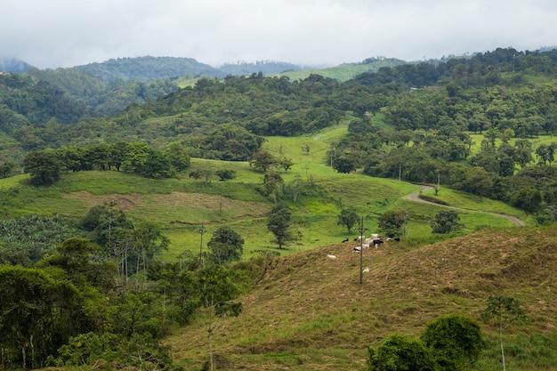 Vista da floresta tropical em tempo chuvoso na costa rica Foto gratuita
