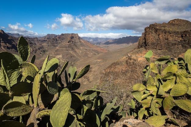 Vista da paisagem montanhosa do ponto de vista degollada de las yeguas. cacto em primeiro plano. gran canaria, na espanha. Foto Premium