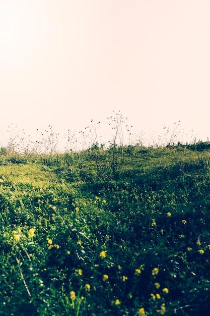 Vista da paisagem verde contra o céu Foto gratuita